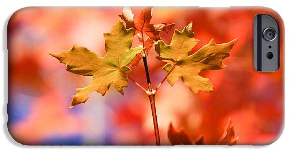 Color iPhone Cases - Autumn Light iPhone Case by Gloria Pasko