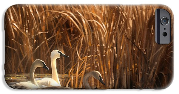 Swan iPhone Cases - Autumn Light- Trumpeter Swans iPhone Case by Aaron Blaise