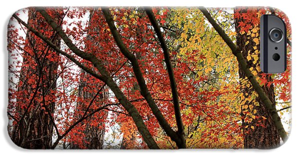 Beautiful Autumn Day iPhone Cases - Autumn Lines and Color iPhone Case by Carol Groenen