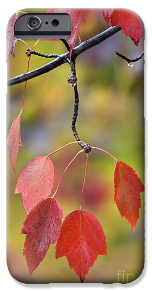 Southern Indiana iPhone Cases - Autumn Maple - D008640 iPhone Case by Daniel Dempster