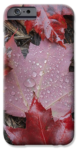 Autumn Scenes iPhone Cases - Autumn maple leaves rain drops red iPhone Case by Andy Gimino
