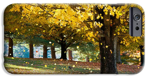 Bokeh iPhone Cases - Autumn Maple Tree Fall Foliage - Wonderland iPhone Case by Dave Allen