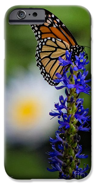 Oktoberfest iPhone Cases - Autumn Monarch iPhone Case by Doug Sturgess