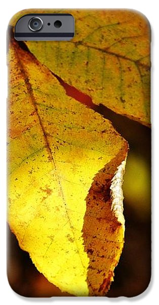 AUTUMN MOON iPhone Case by JAMART Photography
