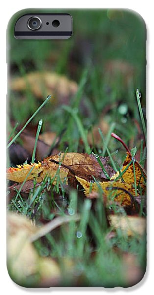 Autumn Morning iPhone Case by Katie Wing Vigil