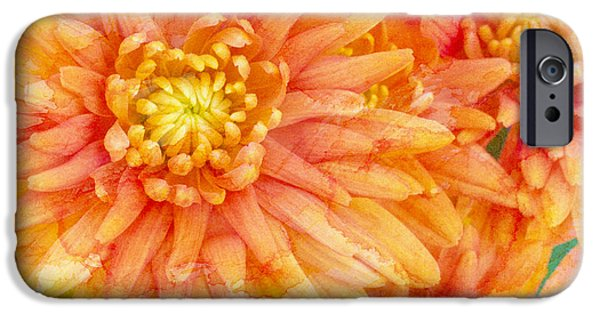 Orange iPhone Cases - Autumn Mums iPhone Case by Heidi Smith