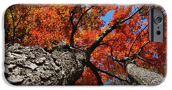 Fall Scenes iPhone Cases - Autumn Nature Maple Trees iPhone Case by Christina Rollo