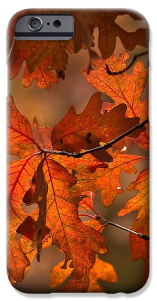Autumn Oak iPhone Case by Steve Gadomski