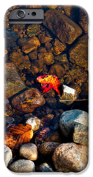 Autumn Leaf On Water iPhone Cases - Autumn on the Shore iPhone Case by David Patterson