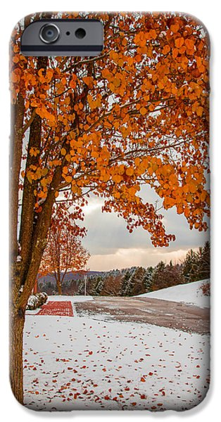 Trees In Snow iPhone Cases - Autumn or Winter iPhone Case by April Reppucci
