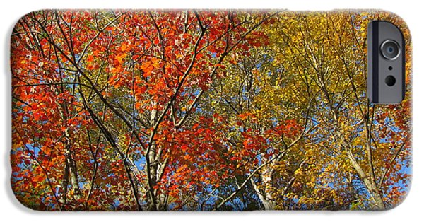 Abstract Digital Photographs iPhone Cases - Autumn palette iPhone Case by France Laliberte