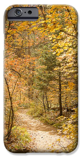 West Fork iPhone Cases - Autumn Path iPhone Case by Focus On Nature Photography