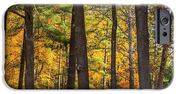 Litchfield County Landscape iPhone Cases - Autumn Pines Square iPhone Case by Bill  Wakeley