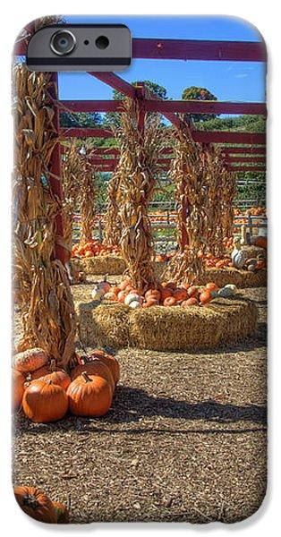 AUtumn Pumpkin Patch iPhone Case by Joann Vitali