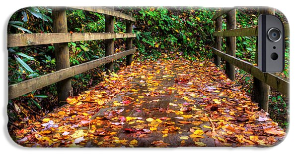 Slickrock iPhone Cases - Autumn Rain at Joyce Kilmer Memorial Forest iPhone Case by Greg Mimbs
