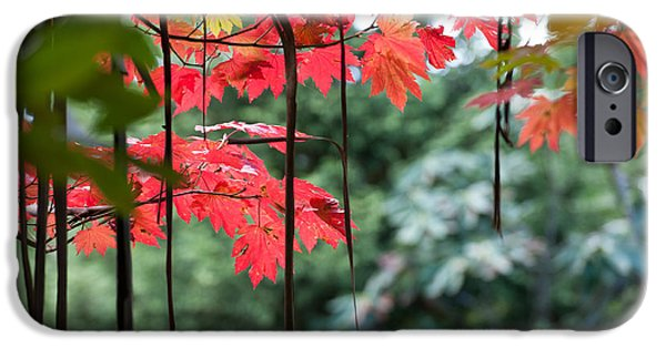 Fall iPhone Cases - Autumn Red - Landscape iPhone Case by Rebecca Tregear