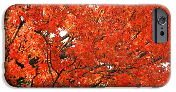 Cora Wandel iPhone Cases - Autumn Red iPhone Case by Cora Wandel