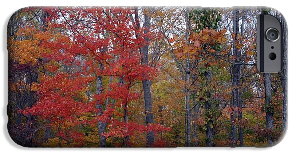 States Tapestries - Textiles iPhone Cases - Autumn Red in Kentucky iPhone Case by Thia Stover
