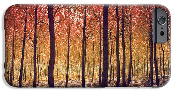 Fall iPhone Cases - Autumn Scenic iPhone Case by Carlos Caetano