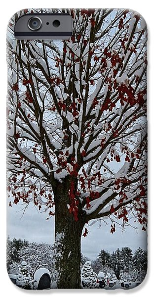 Cemetary iPhone Cases - Autumn Snow Tree iPhone Case by MTBobbins Photography