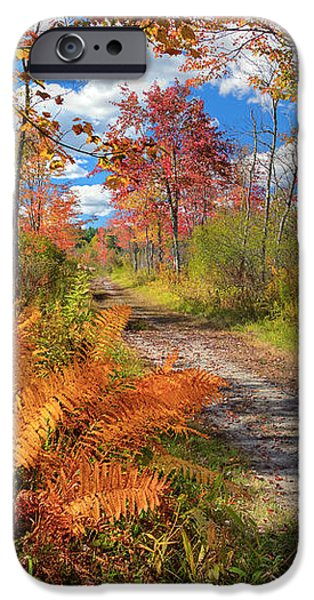 Autumn Splendor iPhone Case by Bill  Wakeley