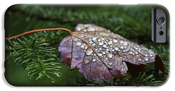 Autumn Leaf On Water iPhone Cases - Autumn Splendor iPhone Case by TB Sojka