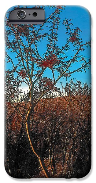 Recently Sold -  - Wintertime iPhone Cases - Autumn iPhone Case by Terry Reynoldson
