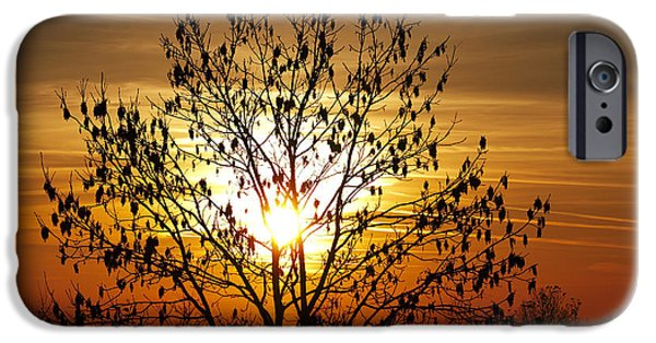Gloaming iPhone Cases - Autumn Tree In The Sunset iPhone Case by Michal Boubin