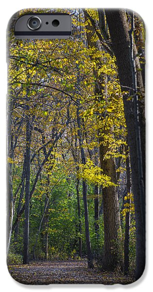 Pathway iPhone Cases - Autumn Trees Alley iPhone Case by Sebastian Musial