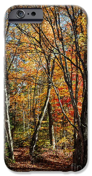 Fall iPhone Cases - Autumn trees iPhone Case by Elena Elisseeva