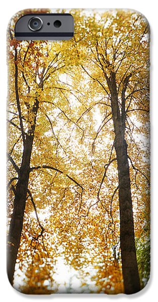 Autumn iPhone Cases - Autumn Trees In A Park, Volunteer Park iPhone Case by Panoramic Images