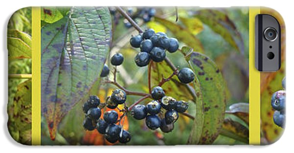 Berry iPhone Cases - Autumn Viburnum Berries Series - A Trilogy iPhone Case by Mother Nature