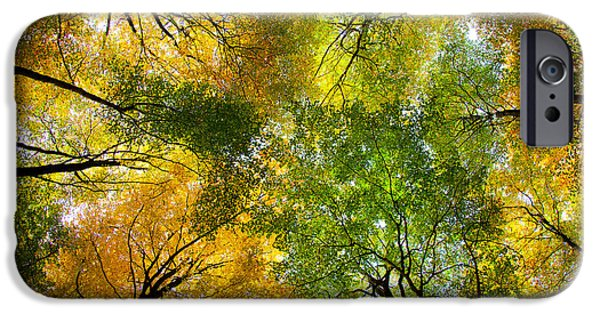 Autumn Woods iPhone Cases - Autumnal Display iPhone Case by Dave Bowman
