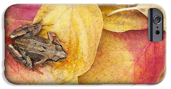 Amphibians Photographs iPhone Cases - Autumnal Frog iPhone Case by Tim Gainey