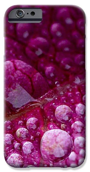 Autumnal iPhone Case by Steven Poulton