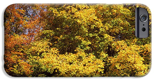 Fall Scenes iPhone Cases - Autumnal Trees In A Park, Ludwigsburg iPhone Case by Panoramic Images