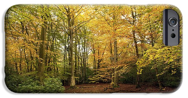 Autumn Scenes iPhone Cases - Autumnal Woodland I iPhone Case by Natalie Kinnear