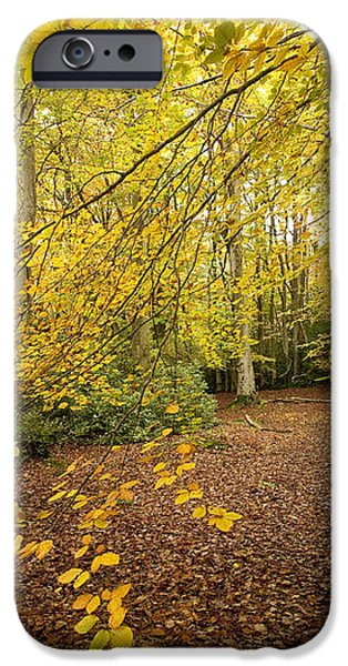 Autumnal Woodland II iPhone Case by Natalie Kinnear
