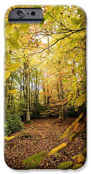 Autumn Scenes iPhone Cases - Autumnal Woodland V iPhone Case by Natalie Kinnear