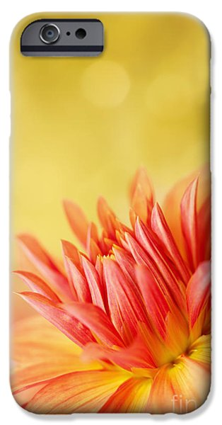 Autumns Calling Card iPhone Case by Reflective Moment Photography And Digital Art Images