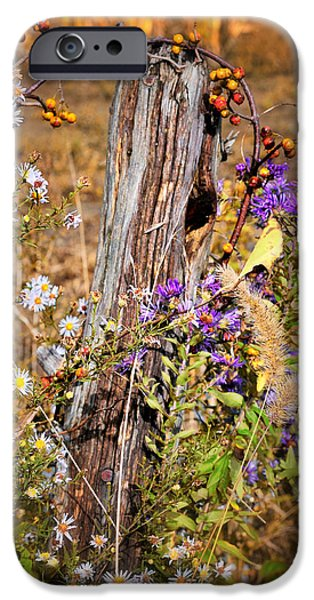 Close Focus Nature Scene iPhone Cases - Autumns Flowers iPhone Case by Thomas Schoeller