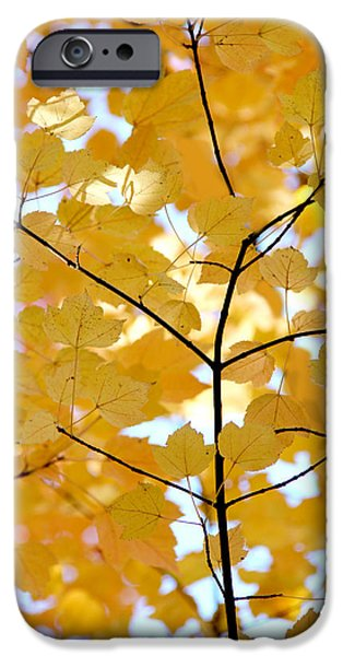 Autumn's Golden Leaves iPhone Case by Jennie Marie Schell