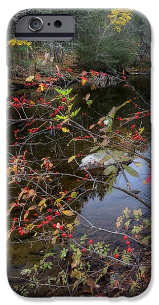 Litchfield County Landscape iPhone Cases - Autumns Last Stand iPhone Case by Bill  Wakeley