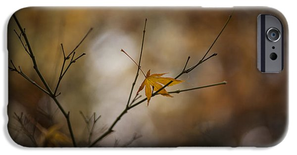 Fall Colors Photographs iPhone Cases - Autumns Solitude iPhone Case by Mike Reid