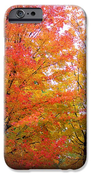 Outdoors iPhone Cases - Autumns Splendour iPhone Case by  The Art Of Marilyn Ridoutt-Greene