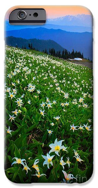 North America Photographs iPhone Cases - Avalanche Lily Field iPhone Case by Inge Johnsson
