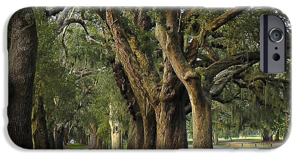 Constitution iPhone Cases - Avenue Of Oaks on St Simons Island iPhone Case by Reid Callaway