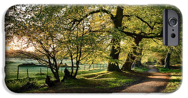 Walk Paths iPhone Cases - Avenue of Light iPhone Case by Tim Gainey