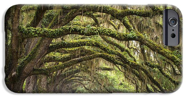 Basin iPhone Cases - Avenue of Oaks - Charleston SC Plantation Live Oak Trees Forest Landscape iPhone Case by Dave Allen