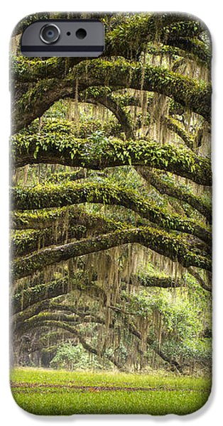 Avenue of Oaks - Charleston SC Plantation Live Oak Trees Forest Landscape iPhone Case by Dave Allen